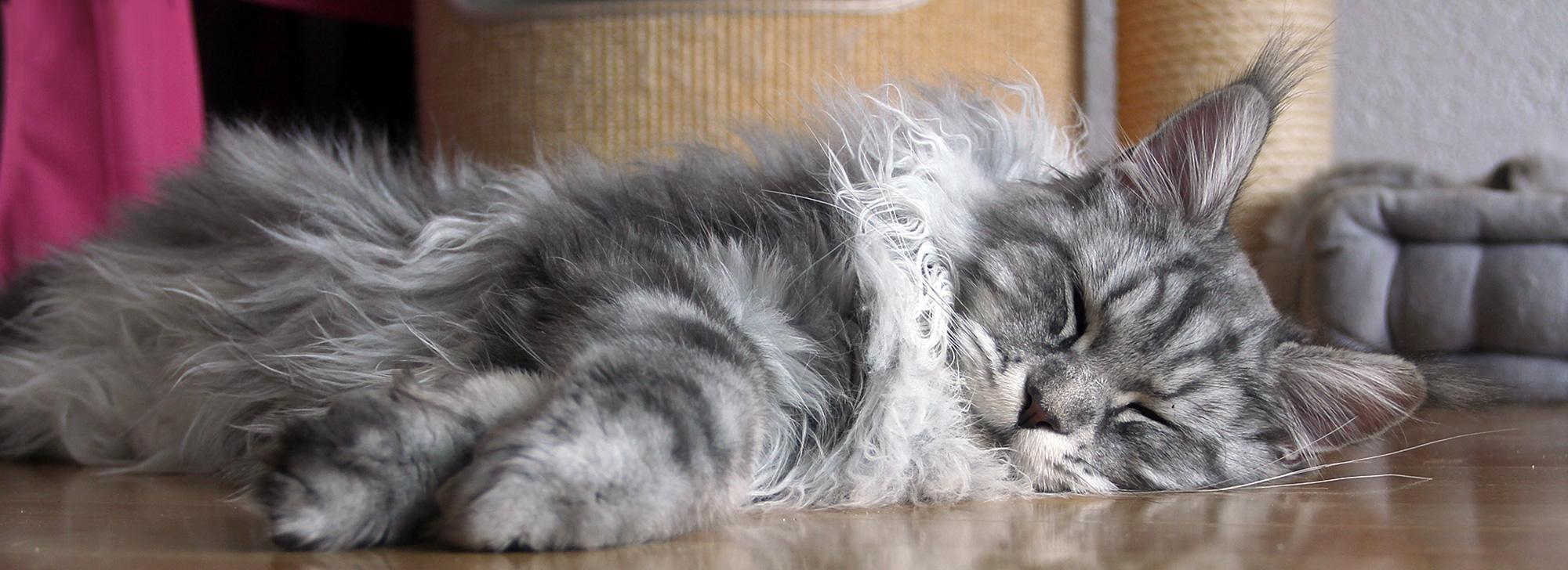 Katzenausstellungen