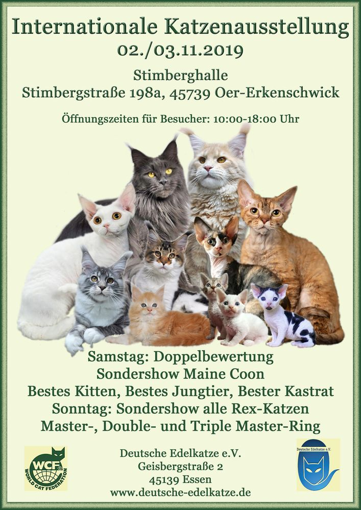 Internationale Katzenausstellung Deutsche Edelkatze e.V.