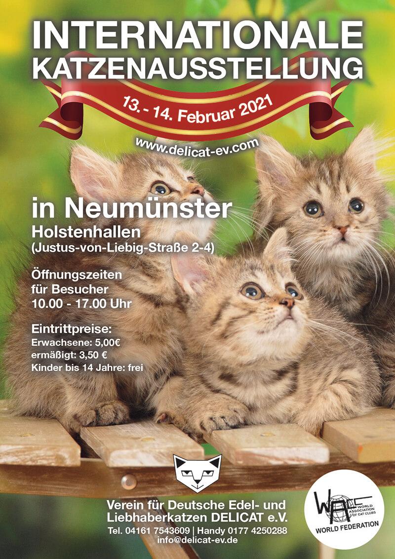 Int.Katzenausstellung des Delicat e.V. In Neumünster