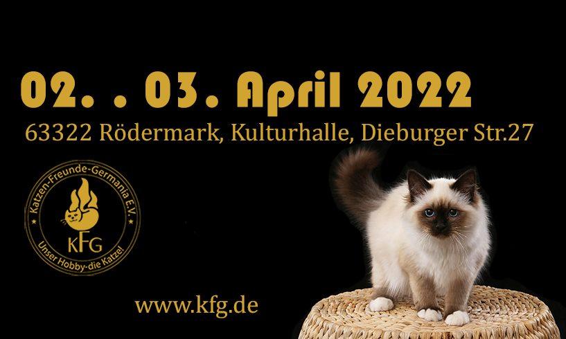 WORLD OF CATS - DIE internationale Katzenausstellung