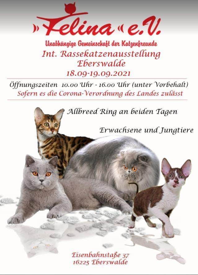 Internationale Rassekatzenausstellung Eberswalde
